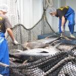 Tunacons descarta que ninguna empresa de Ecuador ha incurrido en pesca ilegal