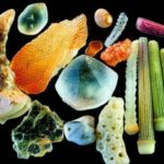 Los granos de arena cuentan con gran riqueza para conocer el ecosistema
