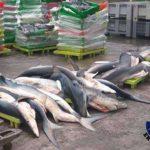 Ecologistas vascos consideran que la pesca ilegal «sale barata»