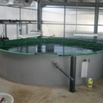 La importancia de la transformación digital en la acuicultura