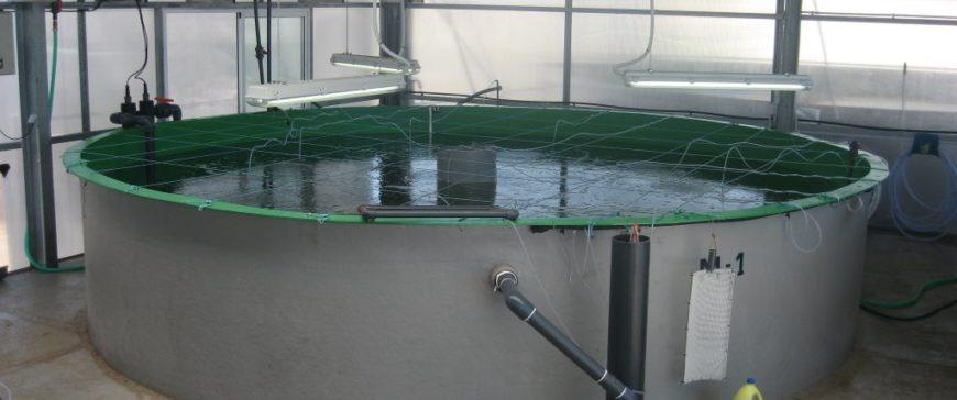 La Infraestructura Científica y Técnica abre sus propuestas de acceso de cara  a contribuir a la producción sostenible del atún