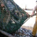 Las redes de fondo ejercen un impacto diferente sobre los hábitats del Mar del Norte