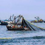 La campaña de anchoveta se inicial el día 16 de noviembre