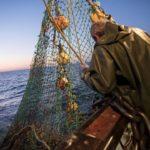 Las trece lonjas de Bretaña bajan en volumen de pescado y precio pero no cierran