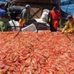 Nueve de cada diez toneladas de recursos pesqueros argentinos se van al exterior