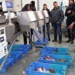 La cooperativa marítima de Dunkerque procede al cierre de la lonja por el impacto del coronavirus