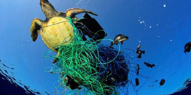 Cuáles son las investigaciones más importantes para la pesca sostenible?