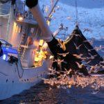 Biólogos y titulados del Mar realizarán 70 embarques en buques de Málaga y Cádiz