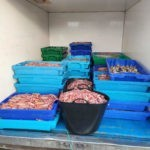 La Junta precinta cuatro embarcaciones y se incauta de más de 360 kilogramos de cigalas