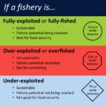 Los datos sobre la sobrepesca de especies son centro de tergiversación