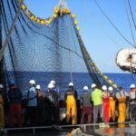 Distribuidores de atún desconocen si su materia prima fue tratada por esclavitud laboral
