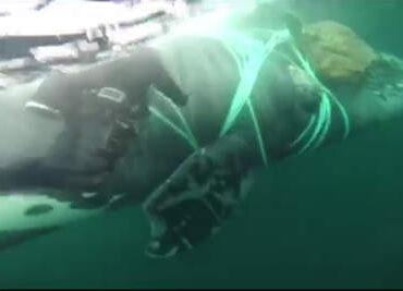 Un proyecto dirigido a evitar la captura de tiburones y rayas en la pesca de atún gana el Innovathon Bermeo