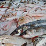 Una gestión sostenible de los océanos asegurará la alimentación a todo el planeta
