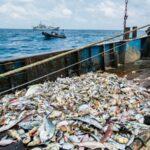 Sea Shepherd agradece la labor de Gabón en contra de la pesca ilegal