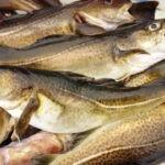 La reunión de NAFO arranca con la preocupación de la propuesta de reducción de bacalao