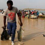 Senegal concede licencias a arrastreros chinos con antecedentes de pesca ilegal