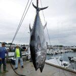 """Europêche mantiene que """"se privilegia el pescado importado barato sobre la producción sostenible de la UE"""""""