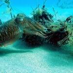 El Govern veda la pesca de sepia en octubre en las costas de Pals y Roses (Girona)