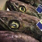 Opromar lanza su marca Merluza Negra de Pesca Responsable